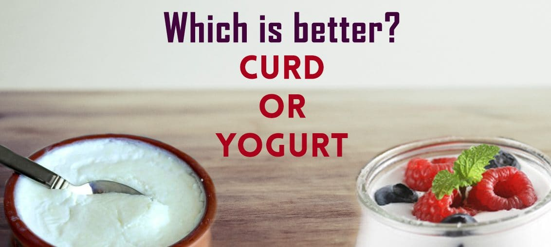 How Curd and Yogurt are Different - Milk and More
